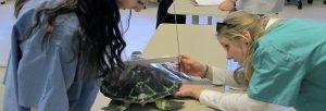 Girls STEM Summit Marine Animal Strandings, Rehabilitation, and Research