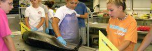 Jr.Tech Marine Mammal Science STEM Workshop