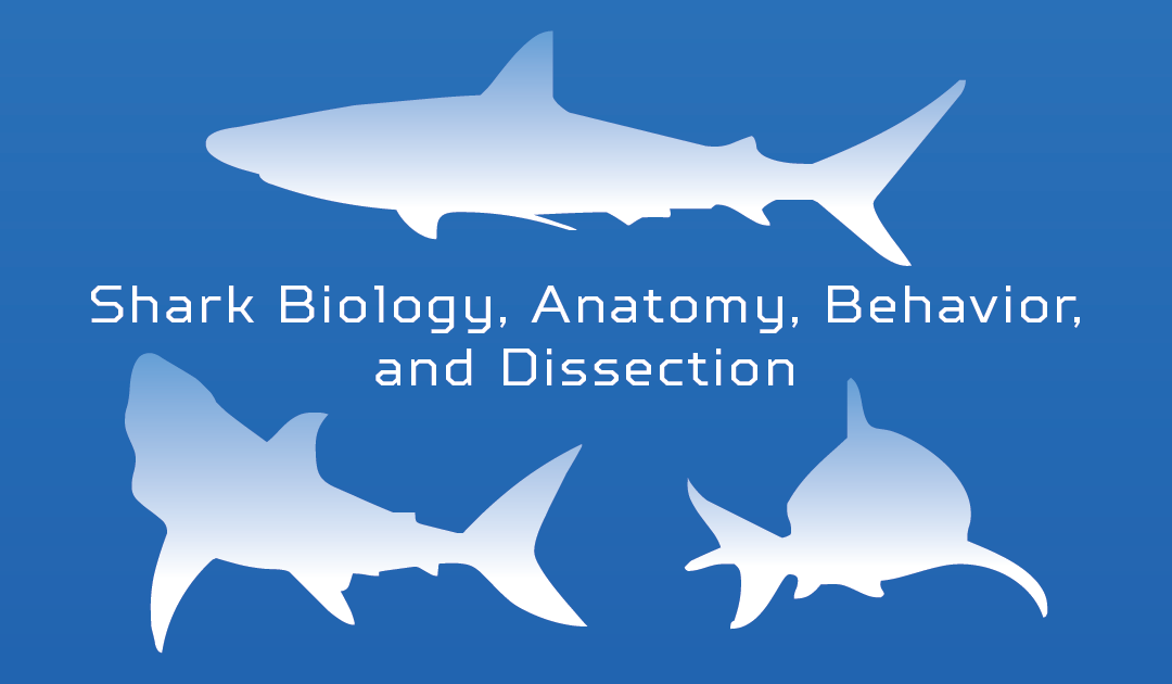 Shark Biology, Anatomy, Behavior, and Dissection STEM Workshop