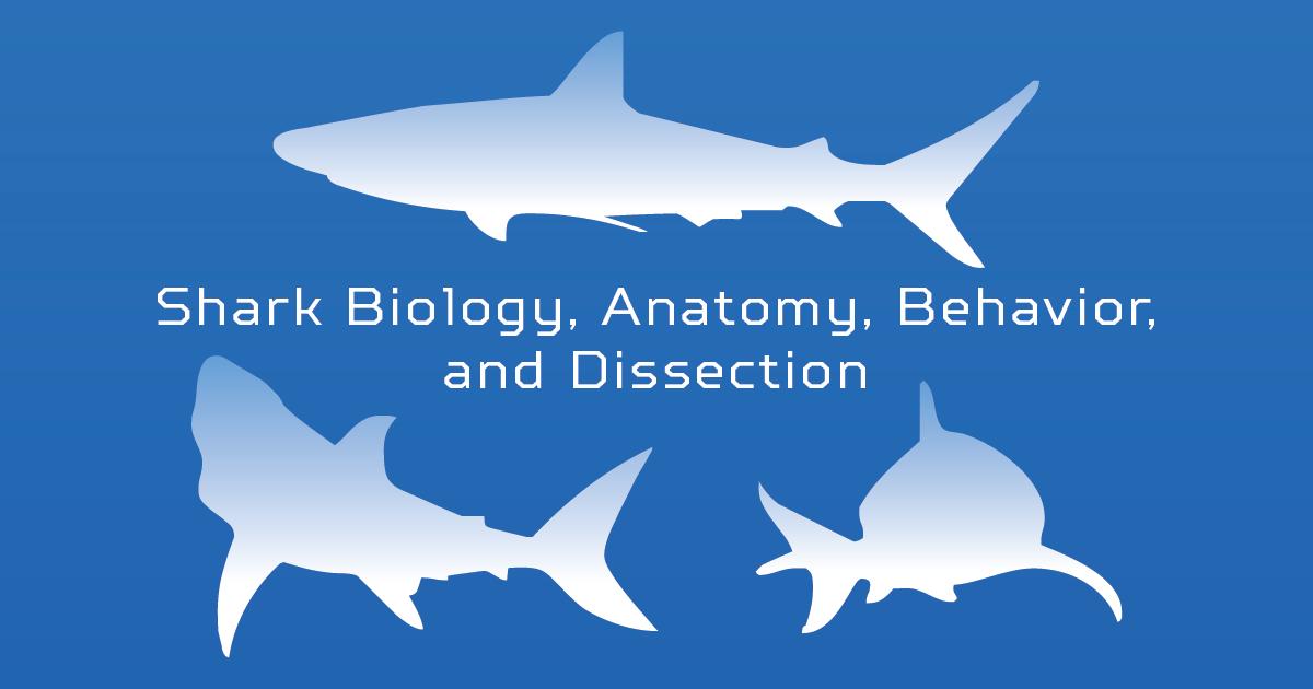 Shark Biology, Anatomy, Behavior and Dissection Jr.Tech STEM Workshop